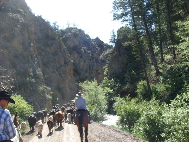 To Be: A Cowgirl and Do A City Slicker Style Cattle Drive